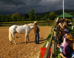 Horse Lecture Demonstrations