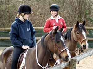 Horse Training Courses